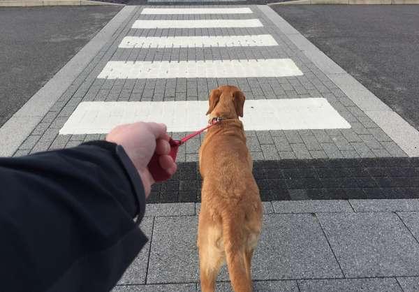 Sport et autonomie : courir avec des chiens-guides